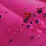 inclusione di Lazurite in cristalli negativi in rubino2